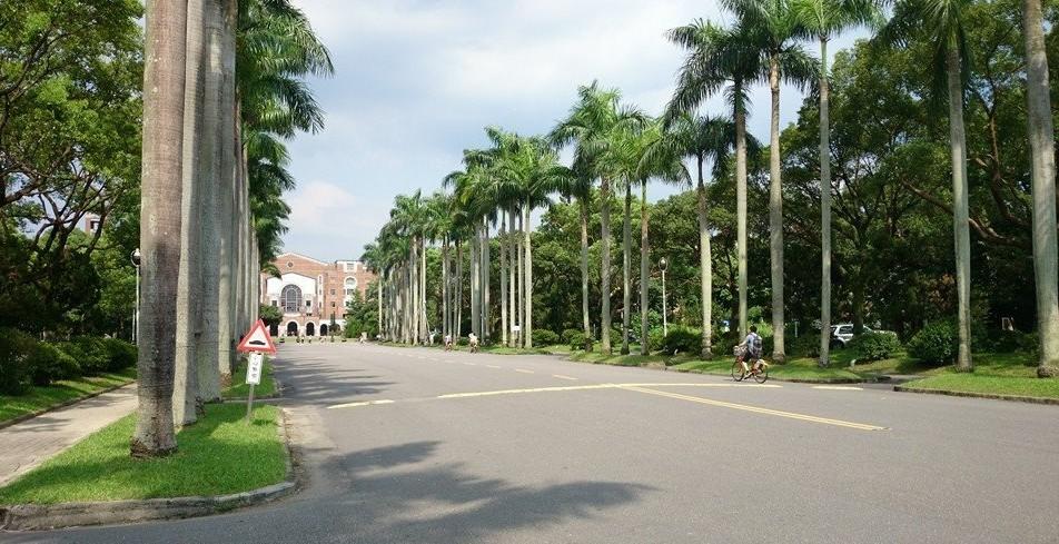 台湾大学 ヤシの木