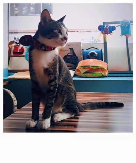 猫カフェ minouminou
