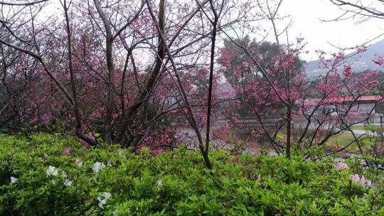 yangmingshan10