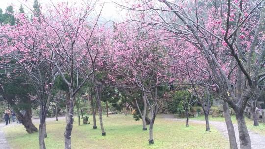 yangmingshan3